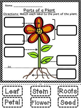 parts of a flower and their functions pdf