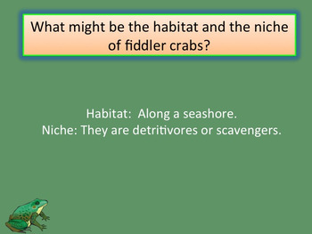 ecology questions and answers pdf