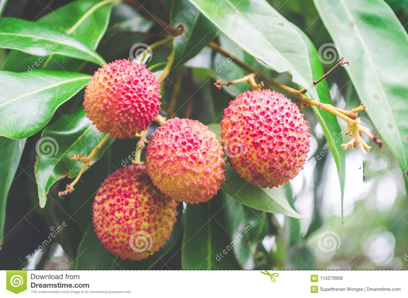 tropical and subtropical fruits pdf